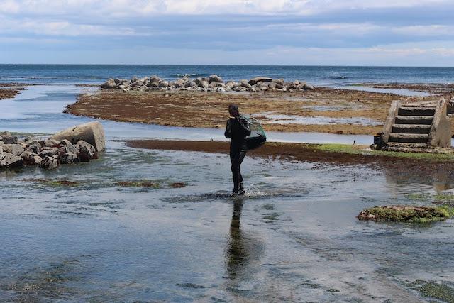 天然ウニを育てるウニ牧場。先代が40年ほど前に浅瀬の岩盤を削り築いた。4年間育てるウニは、最後の1年間、北三陸わかめや昆布をたっぷり食べて育つ。エサの違いが味の違いとなる。
